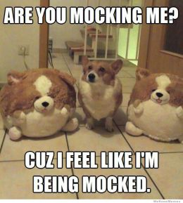 are-you-mocking-me-corgi